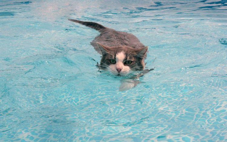 Кот плывет в бассейне