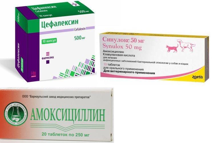Препараты для лечения язв на теле кошки