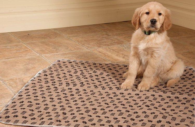 Щенок на многоразовой пеленке для собак