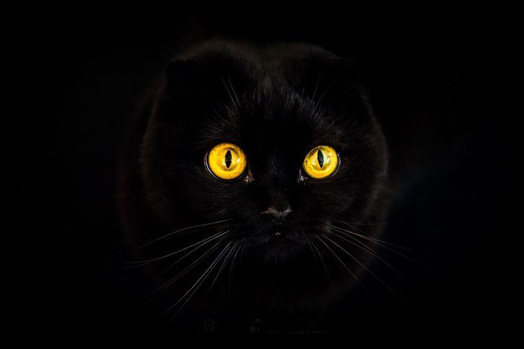 У кошки глаза светятся в темноте