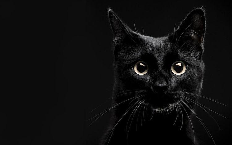 Видят ли кошки в темноте