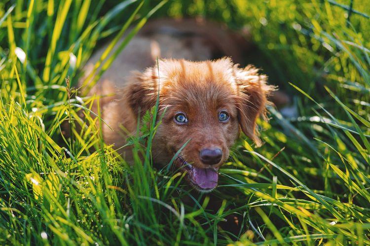 Щенок лежит в траве
