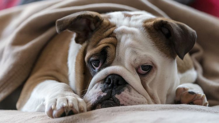 Анемия у собак