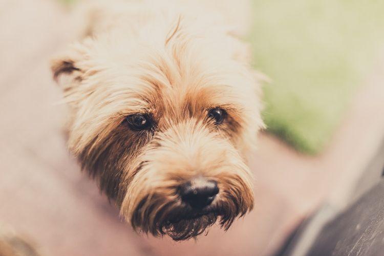 Холецистит у собак