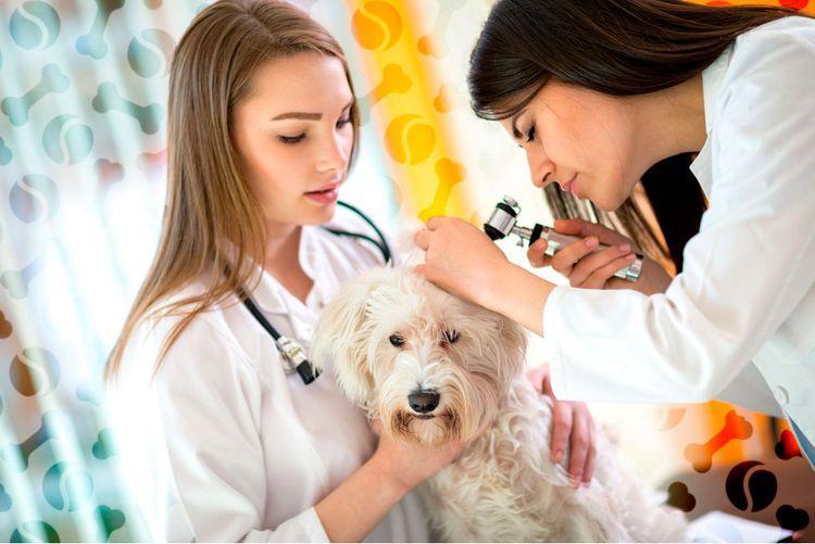 Ветеринары осматривают щенка
