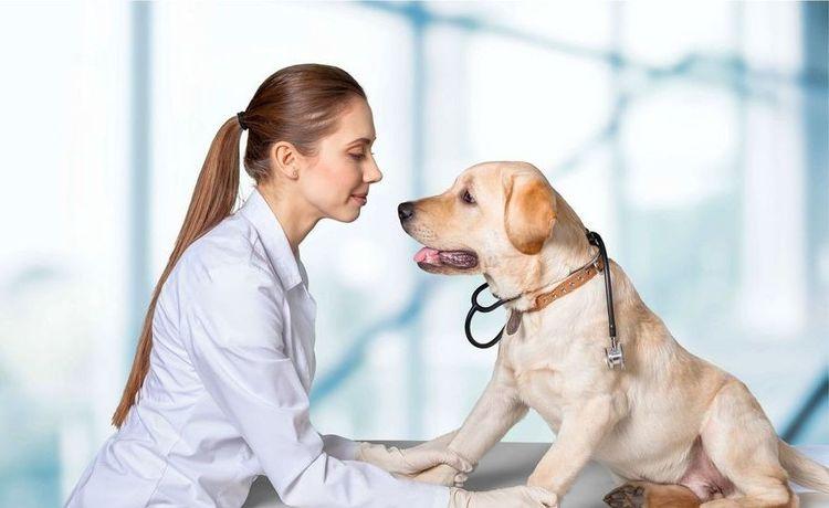 Собака с ветеринаром