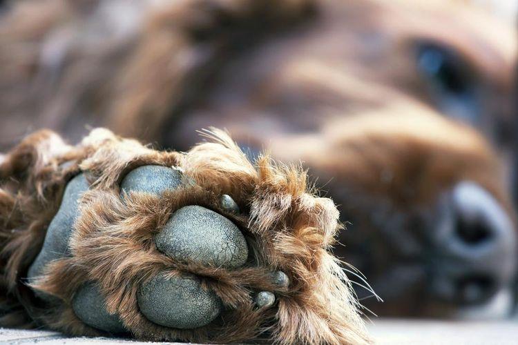Опухоль у собаки