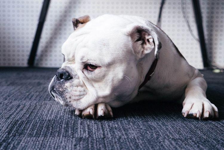 Сопли у собаки
