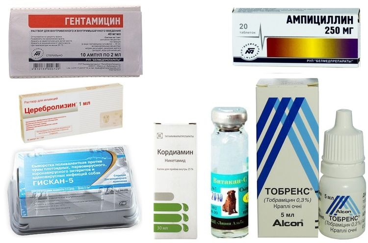 Препараты для лечения чумы у собак