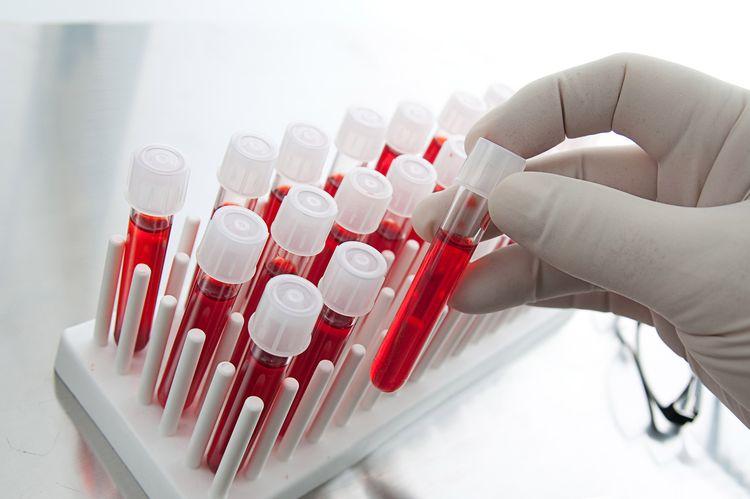 Анализ крови на герпес у собаки