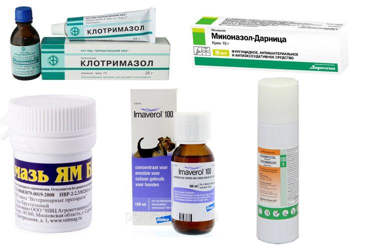 Препараты для лечения микроспории у собак