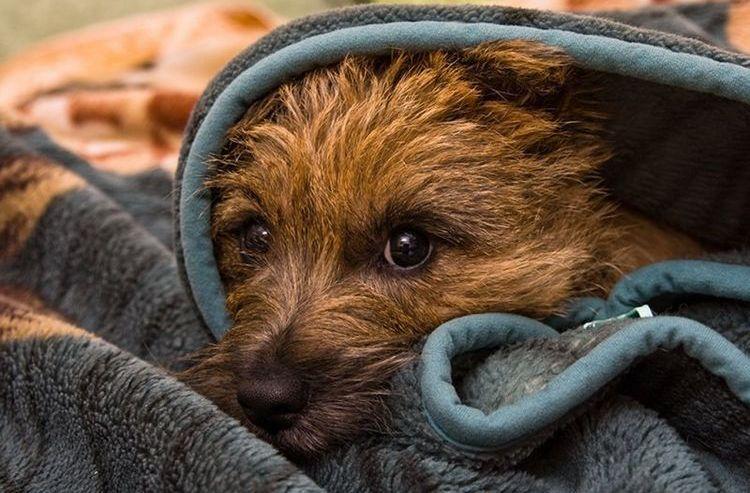 Собака боится звука петард