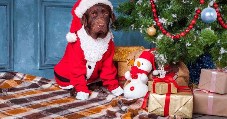 Собака в костюме у новогодней елки