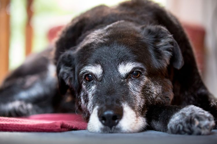 Спондилез у собаки