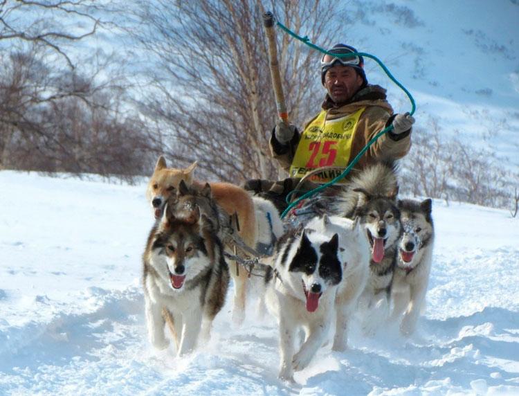 камчатская собака порода