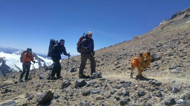 Собака с альпинистами