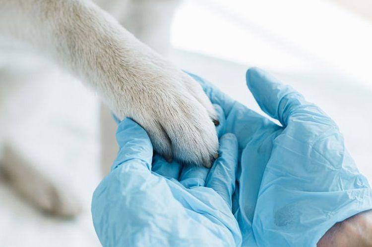 Ветеринар держит лапу собаки