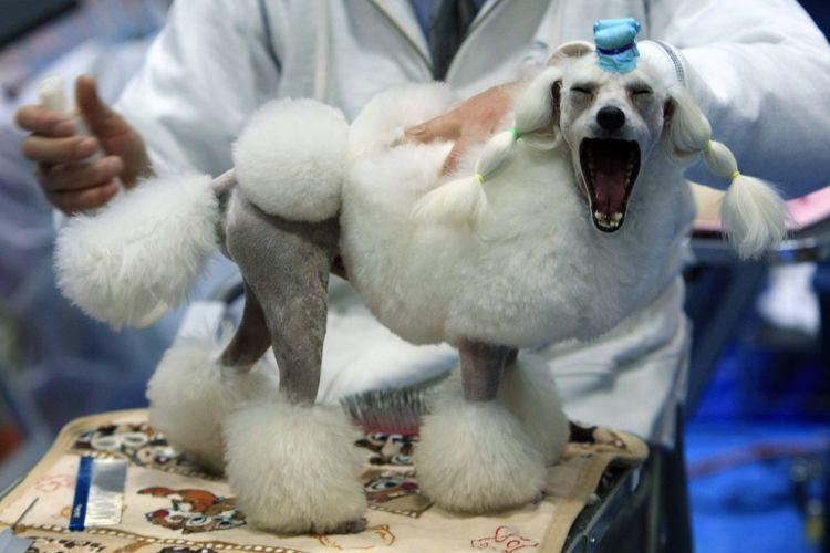Азиатская стрижка собак