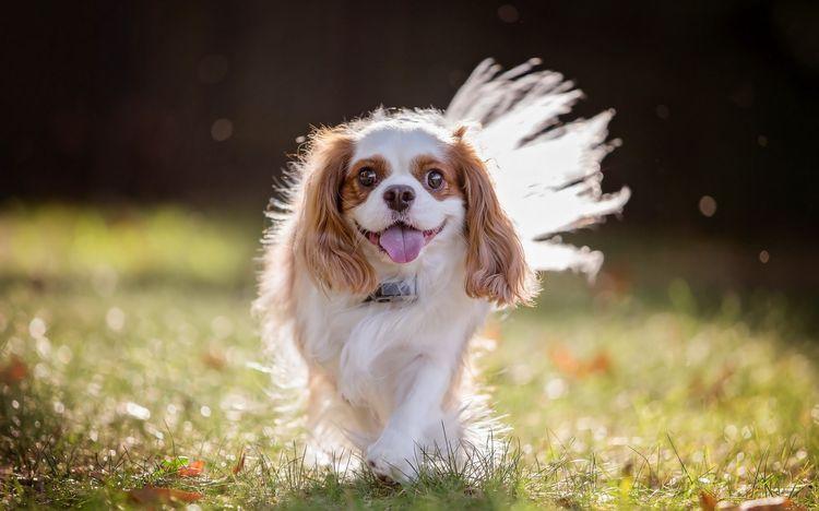 Какое значение имеет хвост для собаки