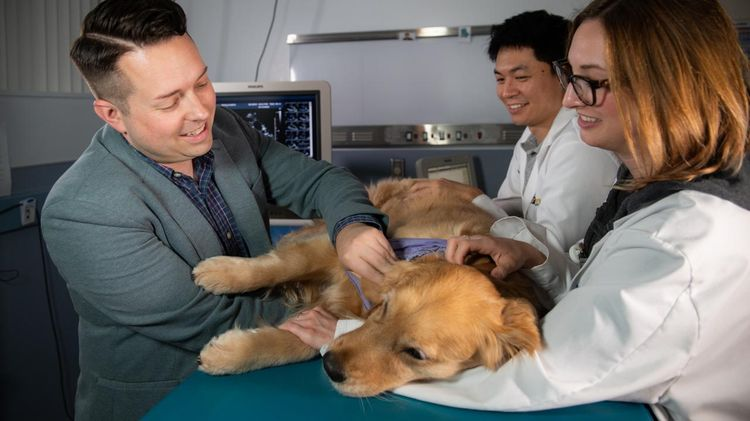 Диагностика онкологии у собаки
