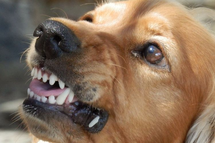 Определен список опасных собак в РФ