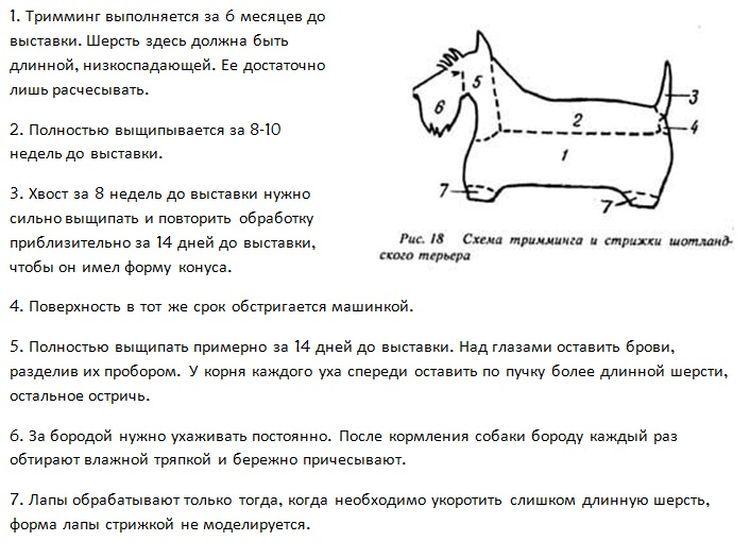 Схема стрижки скотч-терьера