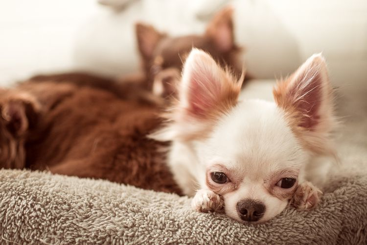 Собаки на передержке