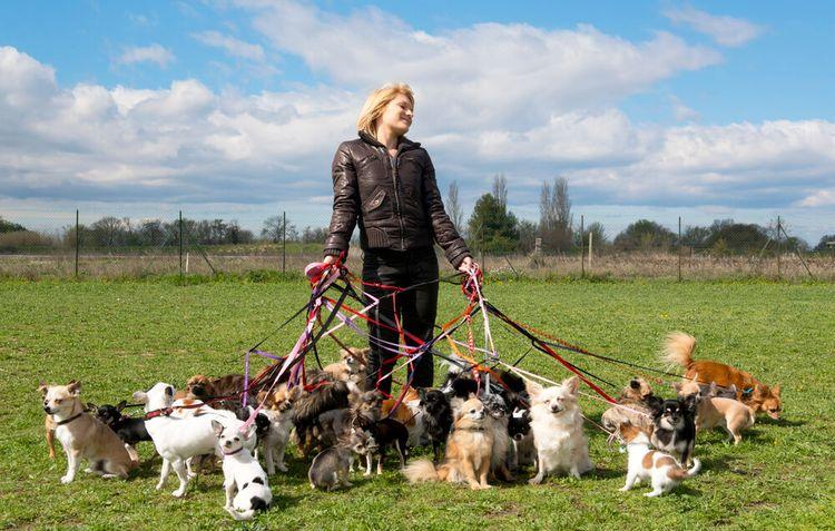 Услуга выгула собак