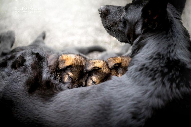 Собак и новорожденные щенки