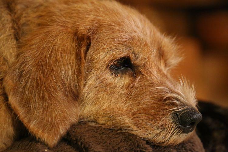 Защемление нерва у взрослой собаки
