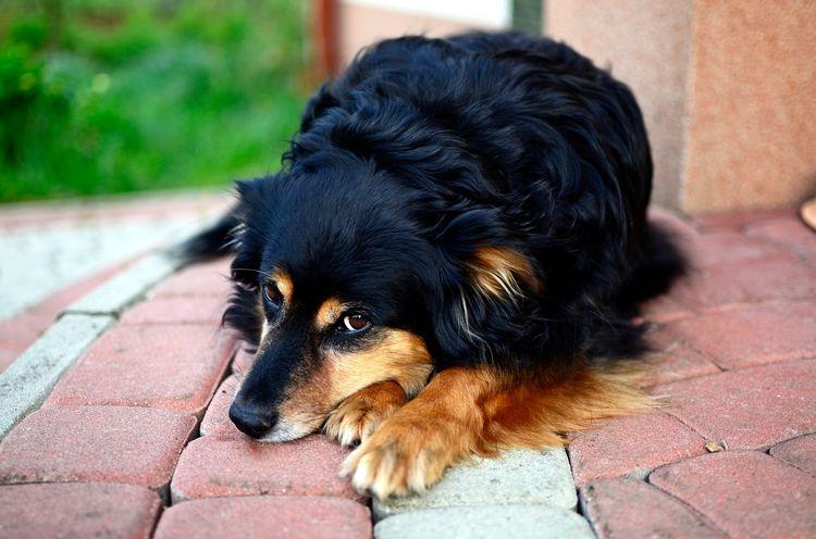 Желтуха у собаки после укуса клеща