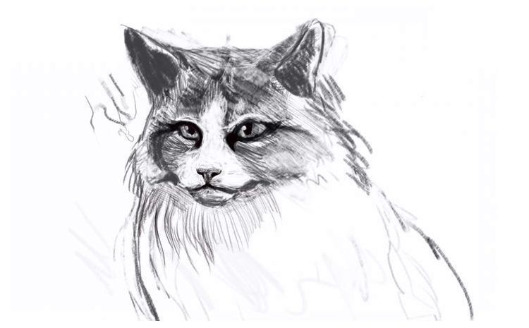Как нарисовать пушистую кошку