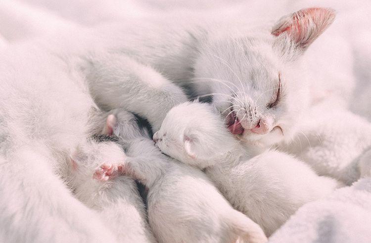Кошка и новорожденные котята