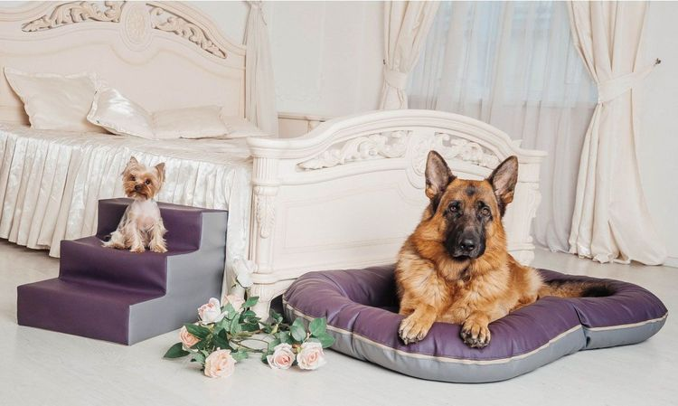 Лесенка для собак мелких пород