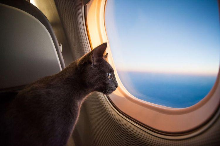 Кошка в самолете
