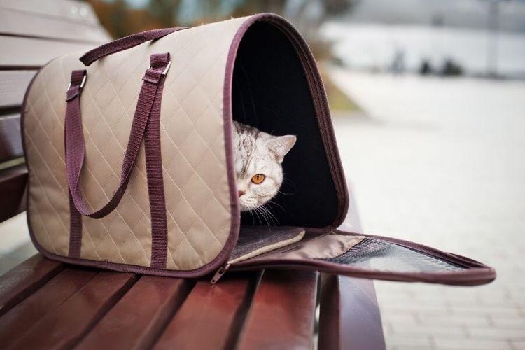 Сумка-переноска для кошек