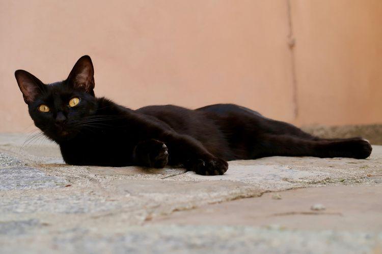 Что делать если дорогу перебежала черная кошка