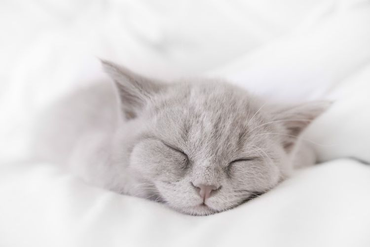 Серый котенок спит