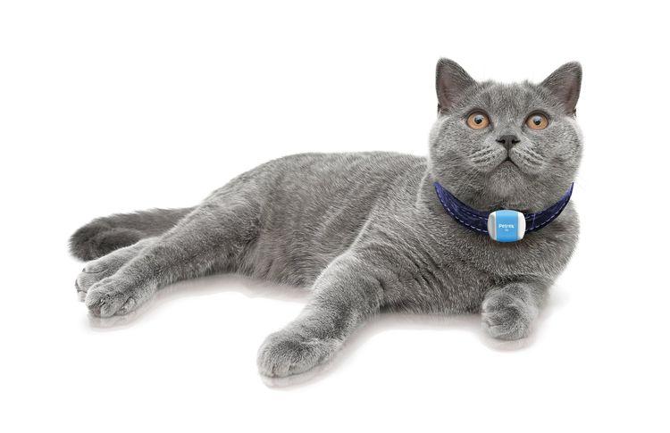 Кошка с ошейником с GPS