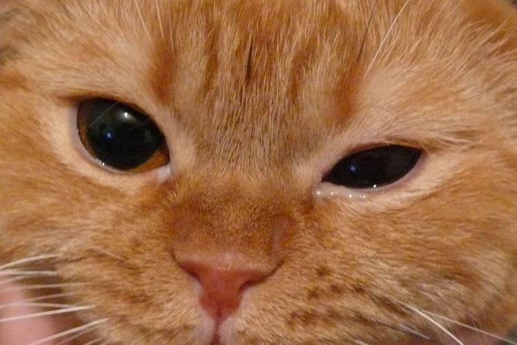 Почему у котенка слезятся глаза
